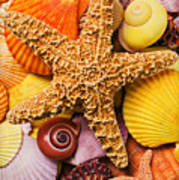 Starfish And Seashells  Poster