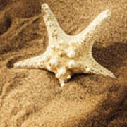 Starfish In Sand Poster