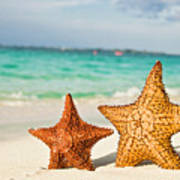 Starfish On Tropical Caribbean Beach Poster by Mehmed Zelkovic