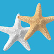 Starfish On Turquoise Poster
