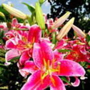 Stargazer Lilies #2 Poster