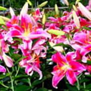 Stargazer Lilies #5 Poster