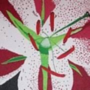 Stargazer Lily Poster