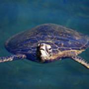 Staring Turtle Poster