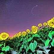 Starry Sky Over Colby Farm Sunflowers Newbury Ma Poster