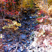 Stepping Stones At Autumn Forest Poster