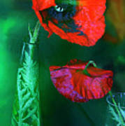 Still Life With Poppies. Poster