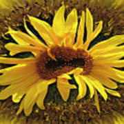 Still Life With Sunflower Poster