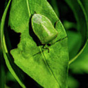 Stink Bug On Leaf Poster
