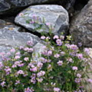 Stone Flowers Pink Poster