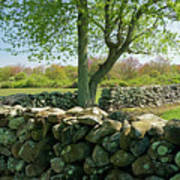 Stone Wall In Rhode Island Poster