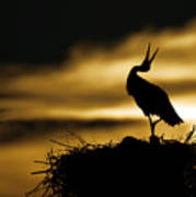 Stork In Sunset Poster