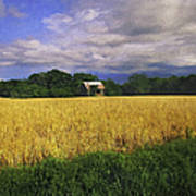 Stormy Old Barn In Wheat Field 2 Poster