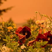 Strange Weather/flourished Flower Poster