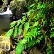Stream El Yunque National Forest Poster
