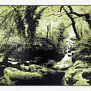 Stream In An Ancient Wood Poster