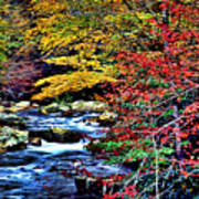 Stream In Autumn Poster