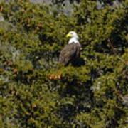 Streamside Eagle Poster