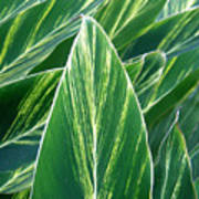 Striated Greens Poster