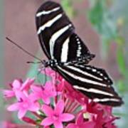 Striped Beauty - Butterfly Poster