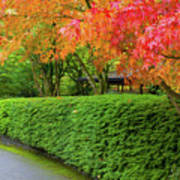 Strolling Path Lined With Japanese Maple Trees In Fall Poster