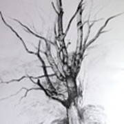 Study Of A Tree Poster