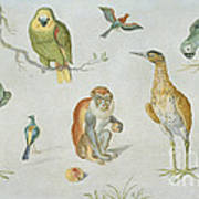 Study Of Birds And Monkeys Poster