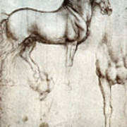 Study Of Horses 1490 Poster