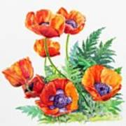 Study Of Poppies Poster
