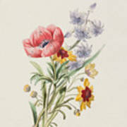 Study Of Wild Flowers Poster