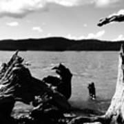 Stump Lake Poster