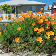 Suburban House On Orchard Avenue With Poppies Hayward California 3 Poster