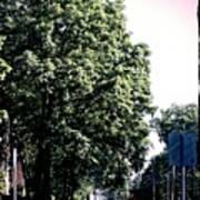 Suburban Tree Poster