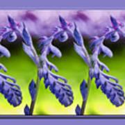 Succulent Swirl Poster