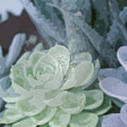 Succulents 2 Poster