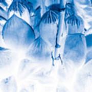 Succulents In Bleu Poster
