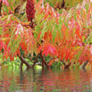 Sumac Tree Autumn Reflections Poster