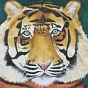 Sumatran Tiger Poster