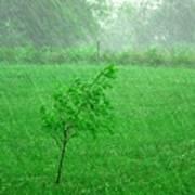 Summer Downpour Poster