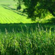 Summer Fields Of Green Poster by Sandra Cunningham