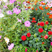 Summer Flowers 3 Poster