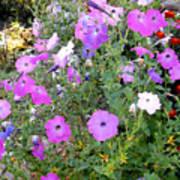 Summer Flowers 5 Poster