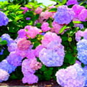 Summer Hydrangeas #2 Poster