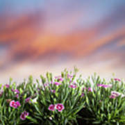 Summer Meadow Flowers In Grass At Sunset. Poster