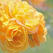 Golden Yellow Roses In The Garden Poster