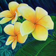 Summer Plumeria Poster