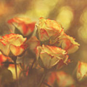 Summer Roses #1 Poster by Pat Abbott