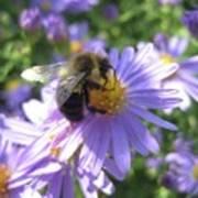 Summertime Bee Poster