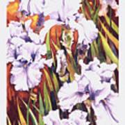 Summertime Irises Poster