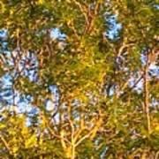 Summertime Tree Poster